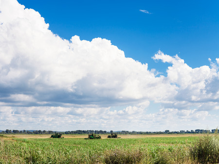 agrarian: landscape with agrarian field and blue sky with white clouds in summer season Kuban, Russia Stock Photo