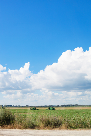 country landscape with agrarian field and blue sky in summer season Kuban, Russia