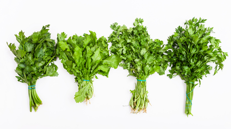 green herbs: set from fresh cut green herbs (celery, cress, cilantro, parsley) on white background Stock Photo