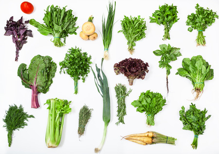 green herbs: different bunches of fresh culinary grasses (chives, beet greens, turnip, basil, celery, rosemary, thyme, mint, parsley, cress, lettuce, spinach, sorrel, cilantro, arugula, leek, dill) on white Stock Photo