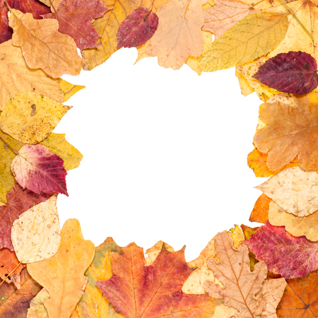 square picture frame from yellow autumn leaves with cut out blank space Stock Photo