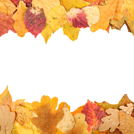 picture framing: upper and lower frames from autumn leaves with blank cut out space