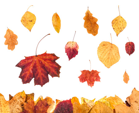 autumn season - collage from red and yellow leaves isolated on white background Stock Photo