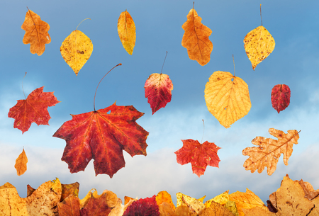 gloaming: falling autumn leaves and sky with rain clouds on background Stock Photo