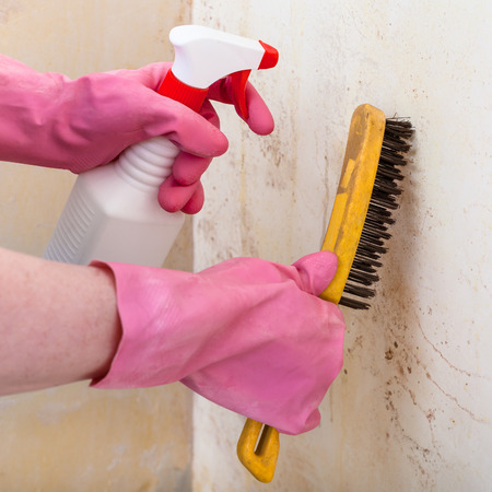 chemical peels: removing of mold from room wall with chemical liquid spray and metal brush