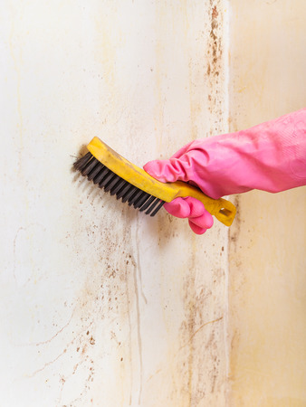 removing of mold from room wall with metal brush Banco de Imagens