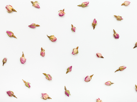 pink rose flower buds on white textured paper background Stock Photo