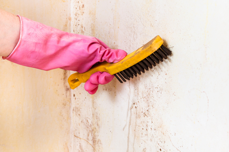 cleaning of room wall from mold with metal brush Archivio Fotografico