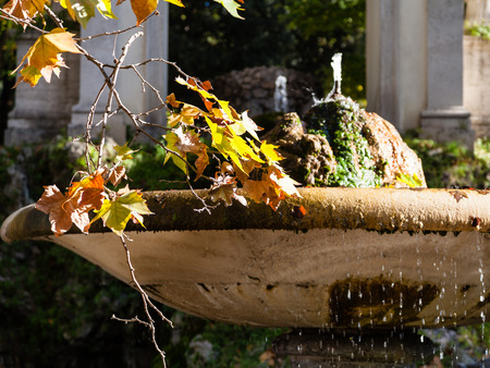 villa borghese: travel to Italy - twig with yellow and orande leaves of sycamore tree near fountain in Villa Borghese public gardens in Rome city in autumn Stock Photo