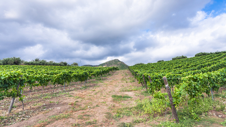 region sicilian: agricultural tourism in Italy - clouds over green vineyard in Etna region in Sicily