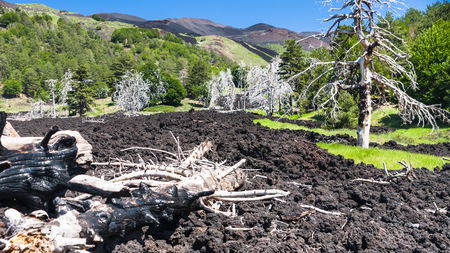 Italy - dried trees in hardened lava flow on slope of Etna volcano in Sicily Stock Photo