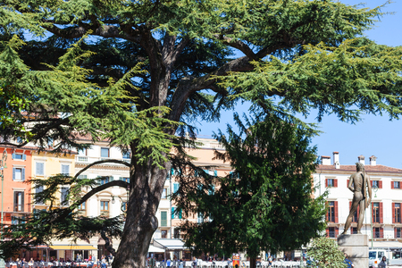 VERONA, ITALY - MARCH 29, 2017: tourists, cedar tree, bronze statue on Piazza Bra in Verona in spring. Piazza Bra (The Bra) is the largest piazza in the city