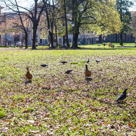 travel to Italy - green grass and old fallen leaves lawn in urban public park Giardini Salvi (Garden of Valmarana Salvi) in Vicenza city in spring Stock Photo