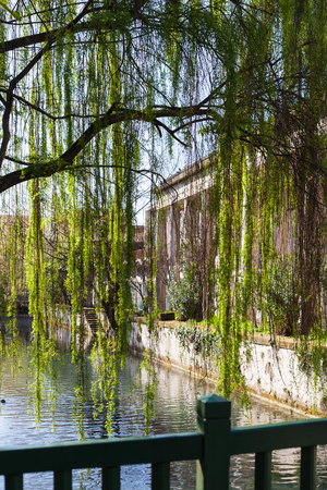 travel to Italy - green tree and waterfront of canal roggia Seriola river in urban public park Giardini Salvi (Garden of Valmarana Salvi) in Vicenza city in spring