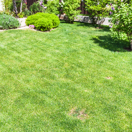 manicured lawn with decorative bushes on backyard of country house in spring
