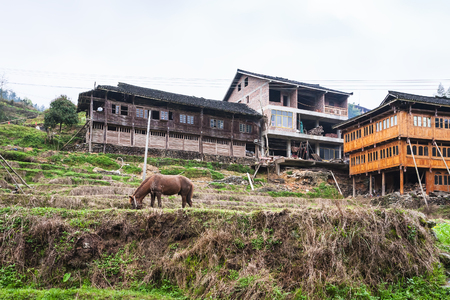 travel to China - horse on terraced garden and houses in Dazhai village in area of Longsheng Rice Terraces (Dragons Backbone terrace, Longji Rice Terraces) in spring season Stock Photo