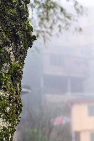 travel to China - overgrown by moss wet tree trunk and house in mist in rainy spring season in Tiantouzhai village of Dazhai Longsheng country