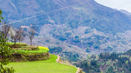 travel to China - green terraced rice paddy in Dazhai village in area Longsheng Rice Terraces (Dragons Backbone terrace, Longji Rice Terraces) country in spring day