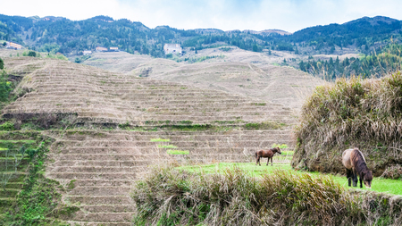 travel to China - rural view of near Dazhai village in country of Longsheng Rice Terraces (Dragons Backbone terrace, Longji Rice Terraces) in spring