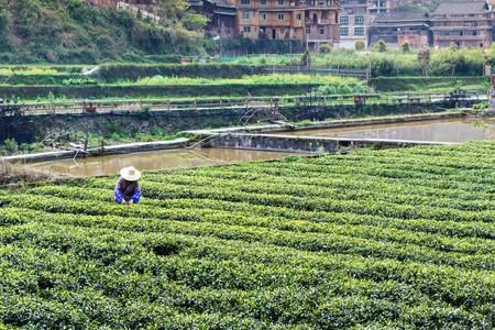 travel to China - peasant on tea field near irrigation canal in Chengyang village of Sanjiang Dong Autonomous County in spring season Stock Photo