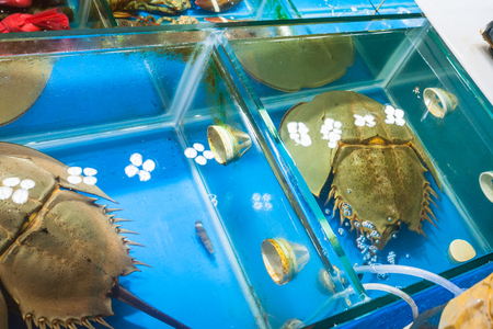 Travel to China - horseshoe crab (xiphosura) in aquarium on Huangsha Aquatic Product Trading Market in Guangzhou city in spring season