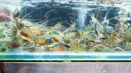 Travel to China - langoustines in window on Huangsha Aquatic Product Trading Market in Guangzhou city in spring season Stock Photo