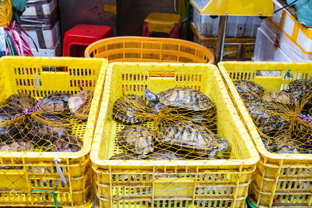 Travel to China - many turtles in boxes on Huangsha Aquatic Product Trading Market in Guangzhou city in spring season Stock Photo