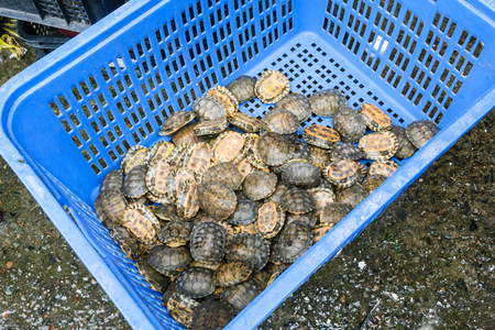 Travel to China - many little turtles in box on Huangsha Aquatic Product Trading Market in Guangzhou city in spring season Stock Photo