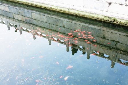 public aquarium: travel to China - pond with goldfishes in Working Peoples Cultural Palace (Imperial Ancestral Hall) public park in Beijing Imperial city in spring Stock Photo