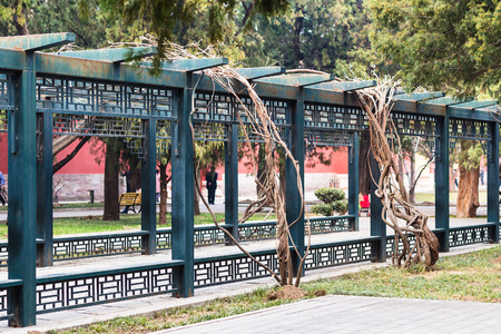travel to China - alley in people in Working Peoples Cultural Palace (Imperial Ancestral Hall) public park in Beijing Imperial city in spring