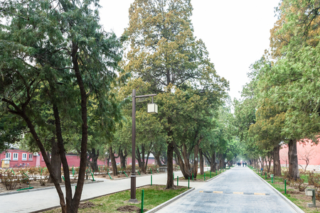 travel to China - alley in public park of Working Peoples Cultural Palace (Imperial Ancestral Hall) in Beijing Imperial city in spring. Stock Photo
