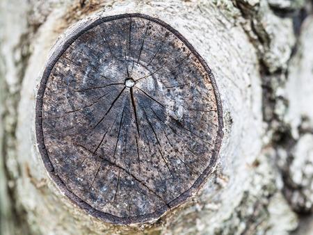 fly on cross section of walnut tree branch close up in Krasnodar region of Russia