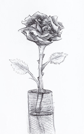 hand painted still-life with rose flower in glass drawn by black pen on white paper Stock Photo