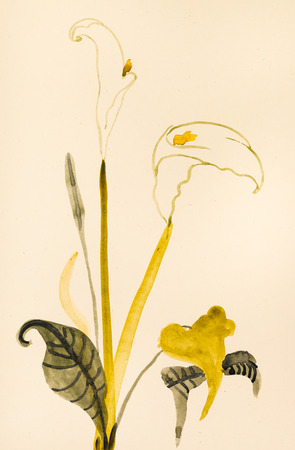 training drawing in suibokuga sumi-e style with watercolor paints - fresh Calla flower hand painted on cream colored paper