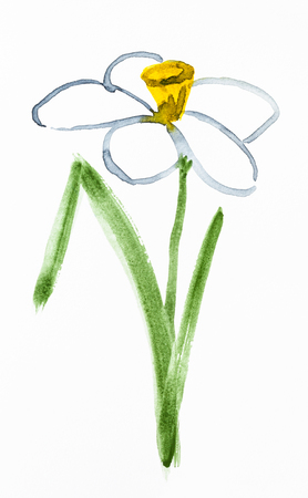 training drawing in suibokuga sumi-e style with watercolor paints - narcissus (jonquil) flower hand painted on white paper