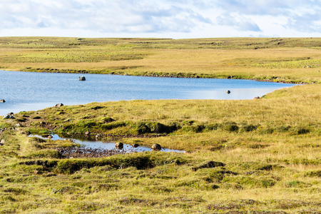 travel to Iceland - Leirvogsvatn swamp landscape of Iceland in september sunny day