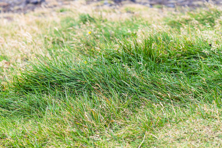 travel to Iceland - green grass on Dyrholaey peninsula, near Vik I Myrdal village on Atlantic South Coast in Katla Geopark in september