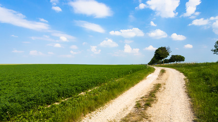 country landscape - country road along green lucerne field near village L'Epine Marne in sunny summer day in Champagne region of France Stok Fotoğraf - 93982674