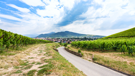travel to France - country road to village between green vineyards in region of Alsace Wine Route in summer day