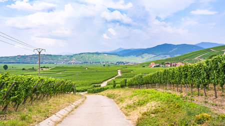 travel to France - country road between vineyards in region of Alsace Wine Route in summer day Stock Photo