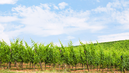 travel to France - blue sky over green vineyard on hill in region of Alsace Wine Route in summer day Stock Photo