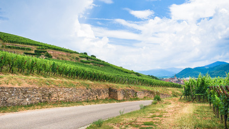 travel to France - road between green vineyards in Alsace Wine Route region in summer
