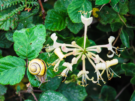 travel in France - snail near flowers flowers on green meadow on coast of Gouffre gulf of English Channel near Plougrescant town of the Cotes-dArmor department in Brittany in summer Stock Photo