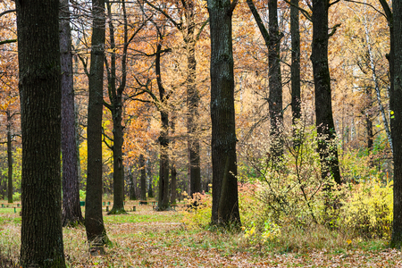 path between trees in urban Timiryazevskiy park in Moscow city in autumn 스톡 콘텐츠