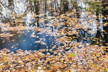 Water surface of forest river with ice crust and fallen leaves in cold autumn day