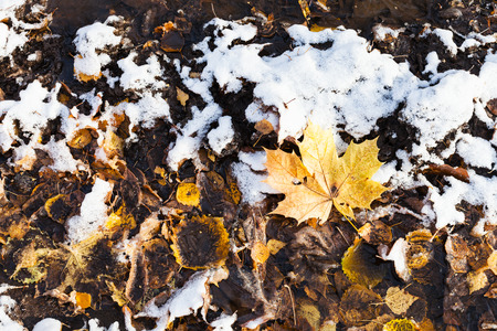 Dirty fallen leaves covered with the first snow on ground of urban park in cold autumn day