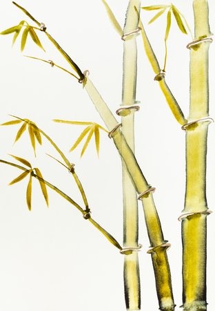 training drawing in sumi-e (suibokuga) style with watercolor paints - bamboo bush is hand drawn on creamy paper