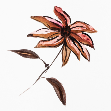 training drawing in sumi-e (suibokuga) style - poinsettia flower handpainted by brown watercolors on white paper