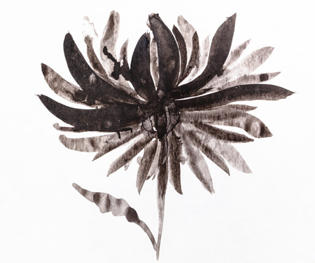 training drawing in sumi-e (suibokuga) style - chrysanthemum flower handpainted by black watercolors on white paper