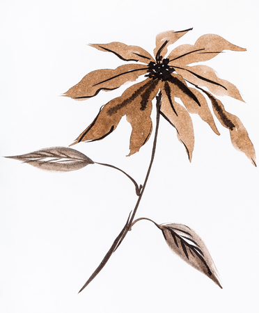 training drawing in sumi-e (suibokuga) style - poinsettia flower hand painted by brown watercolours on white paper